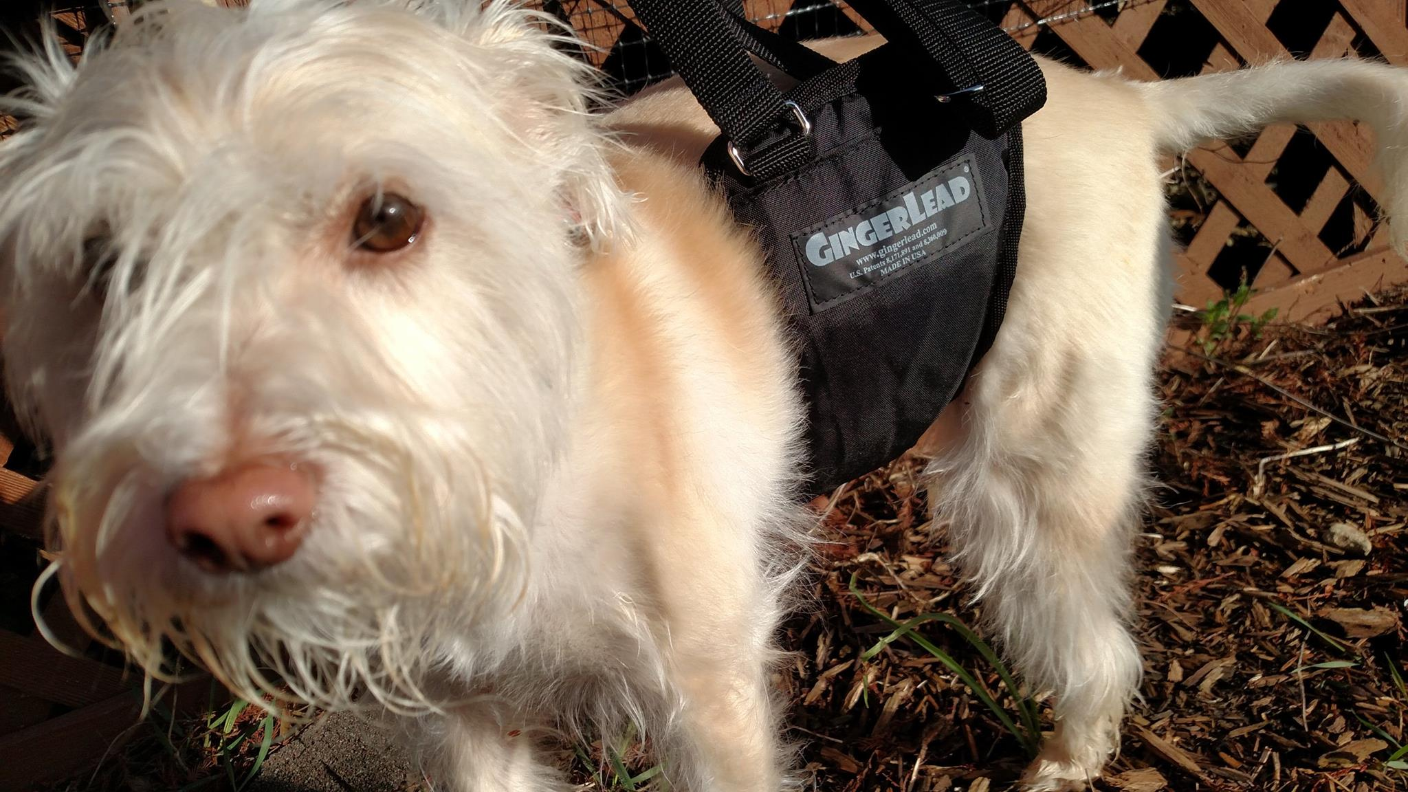 Best dog harness to support back legs | Natural Dog Owner