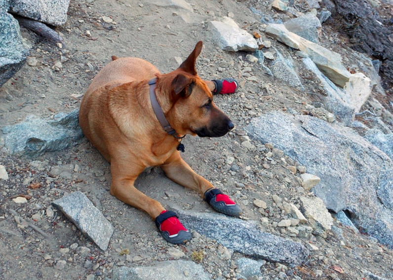 The best dog boots for summer and hot