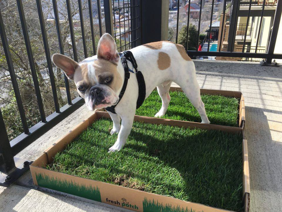 Which Type Of Dog Gr Pad Is Best For Your Balcony