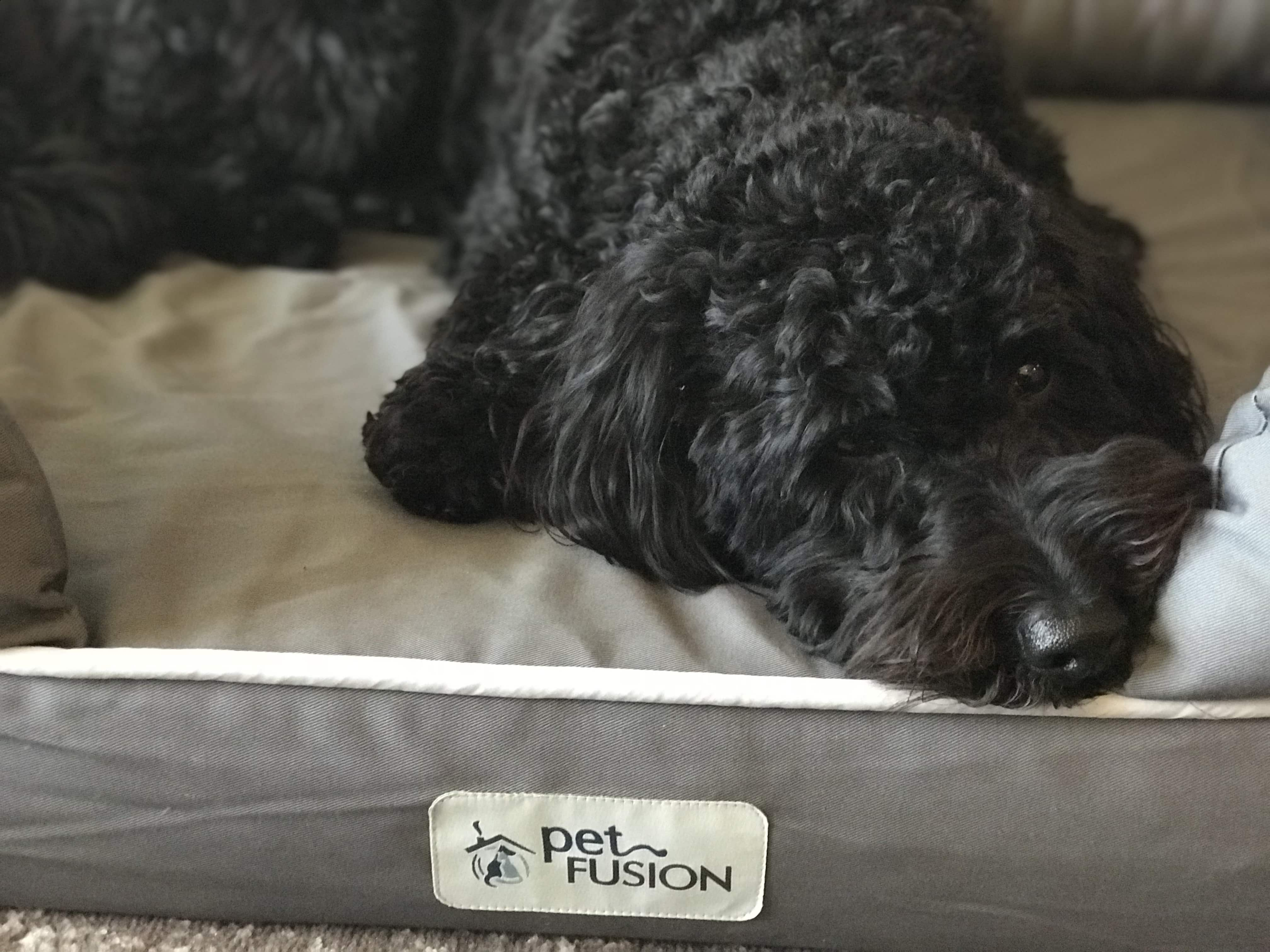 Petfusion Ultimate Dog Bed Review Best Dog Bed Ever